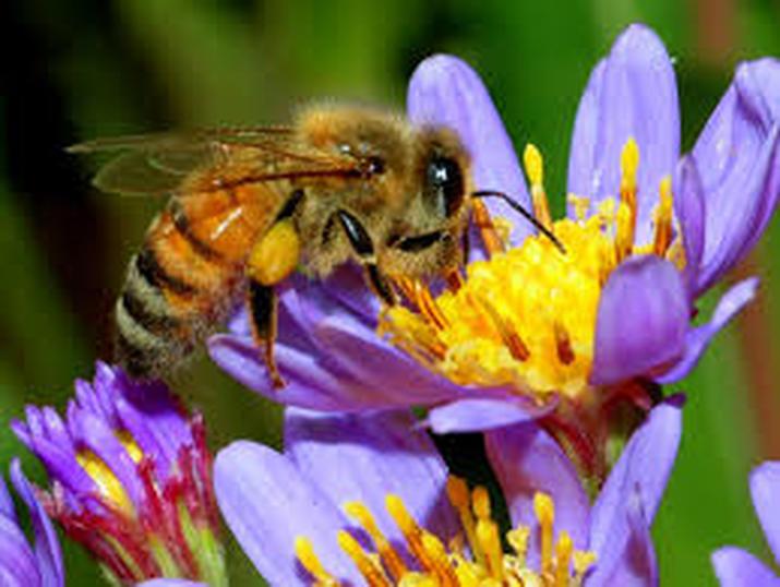 We Saved The Bee's